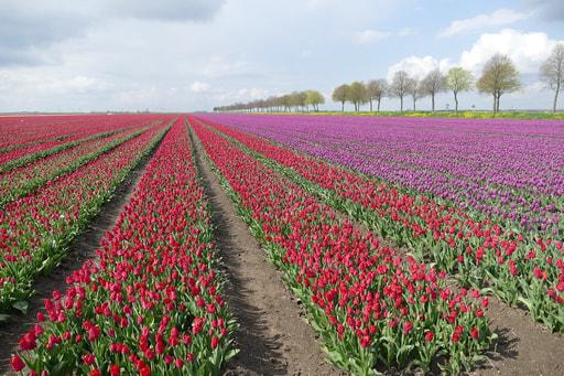 Uw vakantiewoning verhuren in Flevoland met bookinholland.com